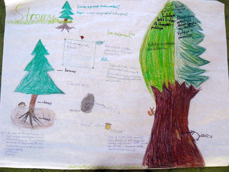 Prezeráte obrázky k článku: O životnom prostredí, stromy a život okolo nás - projektový deň 2017 vo IV. C