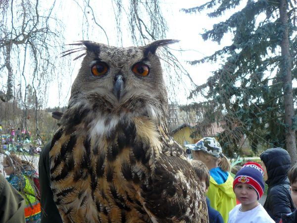 Prezeráte obrázky k článku: Vítanie vtáčích poslov jari